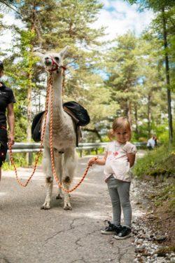 Lama auf dem Pirchhof